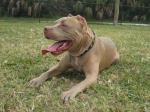 Oden was adopted by the King family in St. Petersburg, FL!